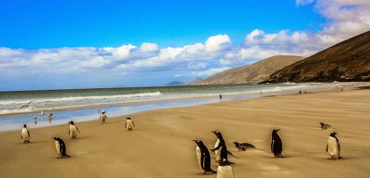 Isole Malvinas o Falkland