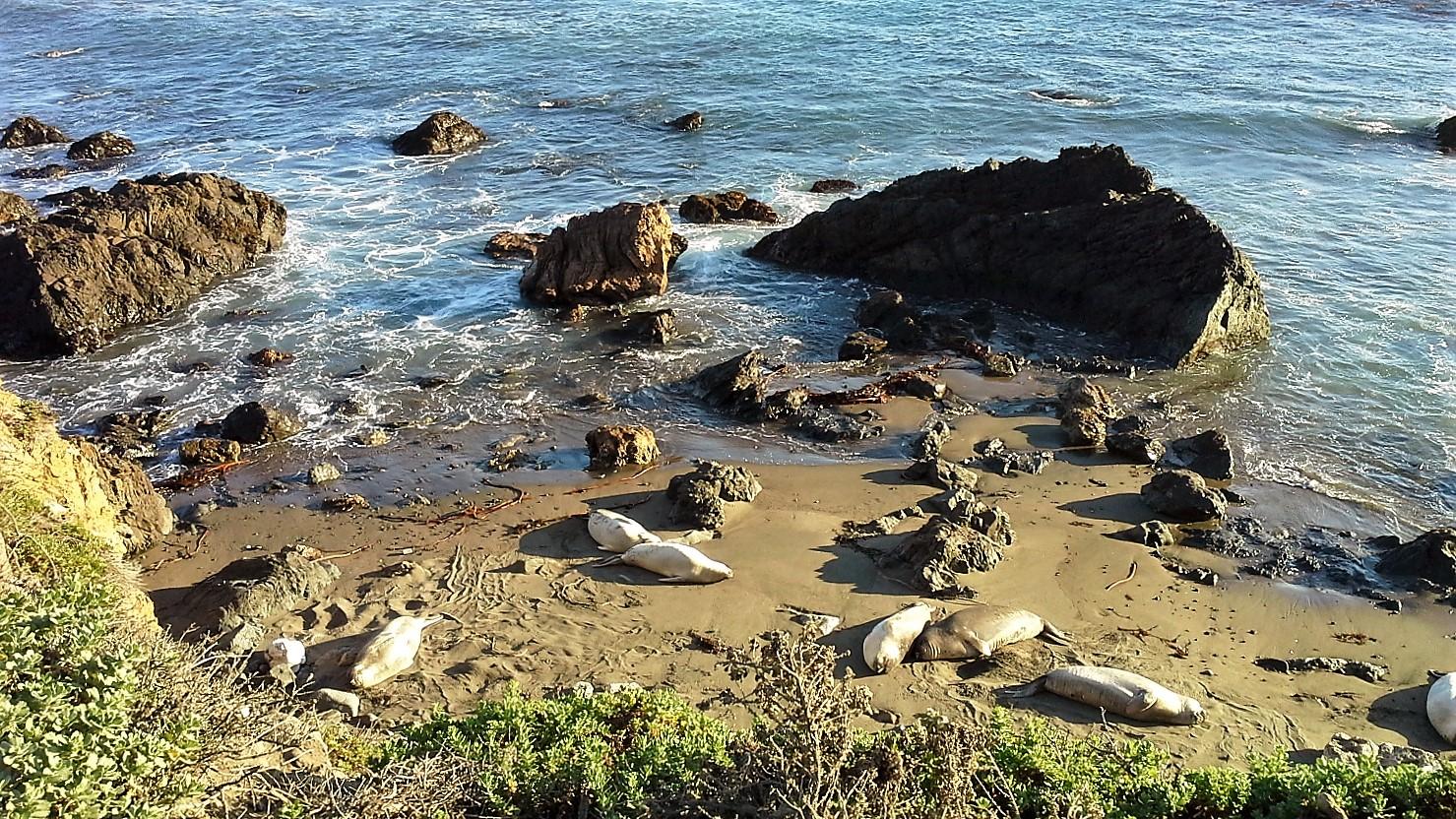 leoni marini california