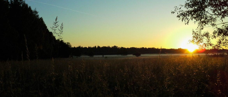 Polonia: visitare la Foresta Bialowieza