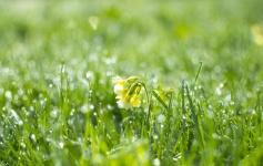 Come una primula a primavera