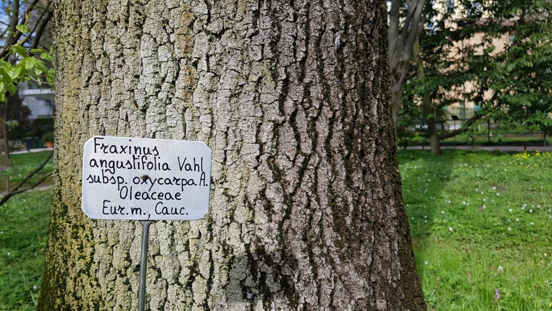 Informazioni sull'Orto Botanico di Padova