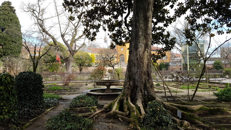 Magnolia Orto botanico Padova