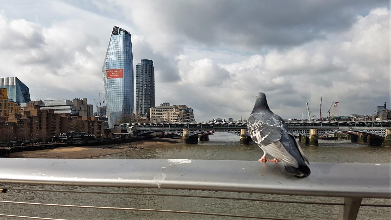 Londra e Piccione