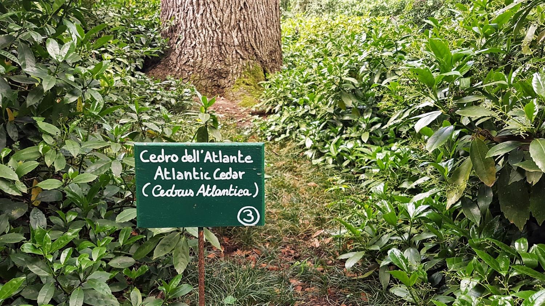 cosa vedere nel giardino di Villa Barbarigo