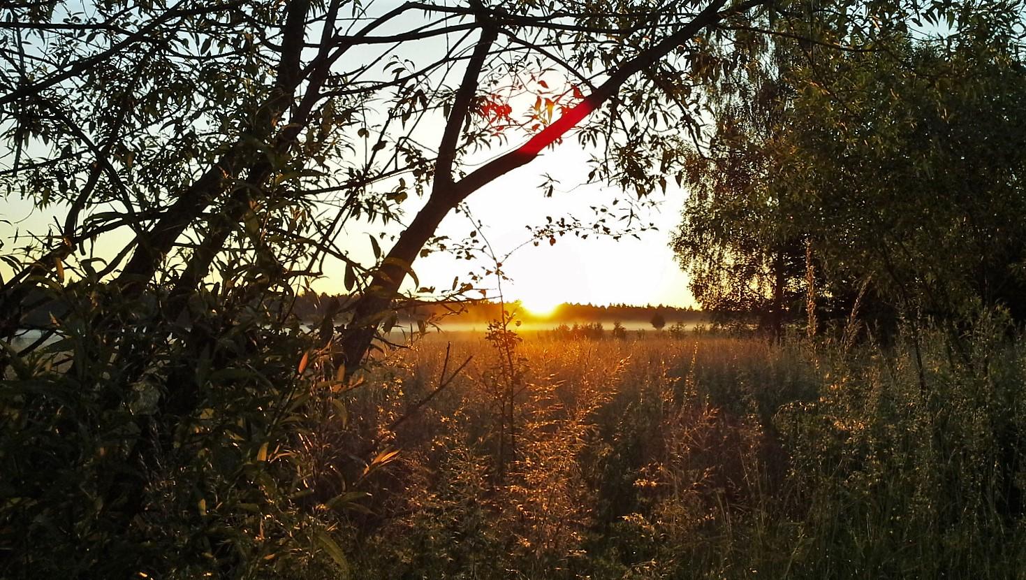 Polonia visitare la Foresta di Bialowieza