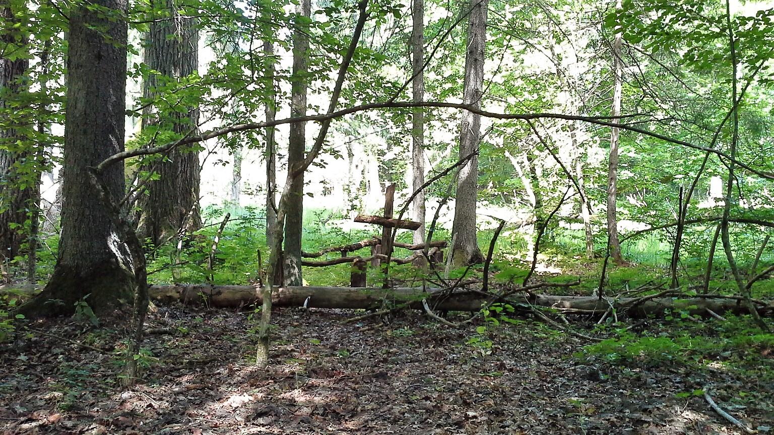 fossa comune Foresta di Bialowieza