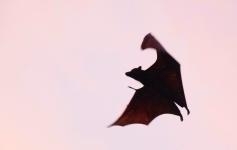 I luoghi di Dracula