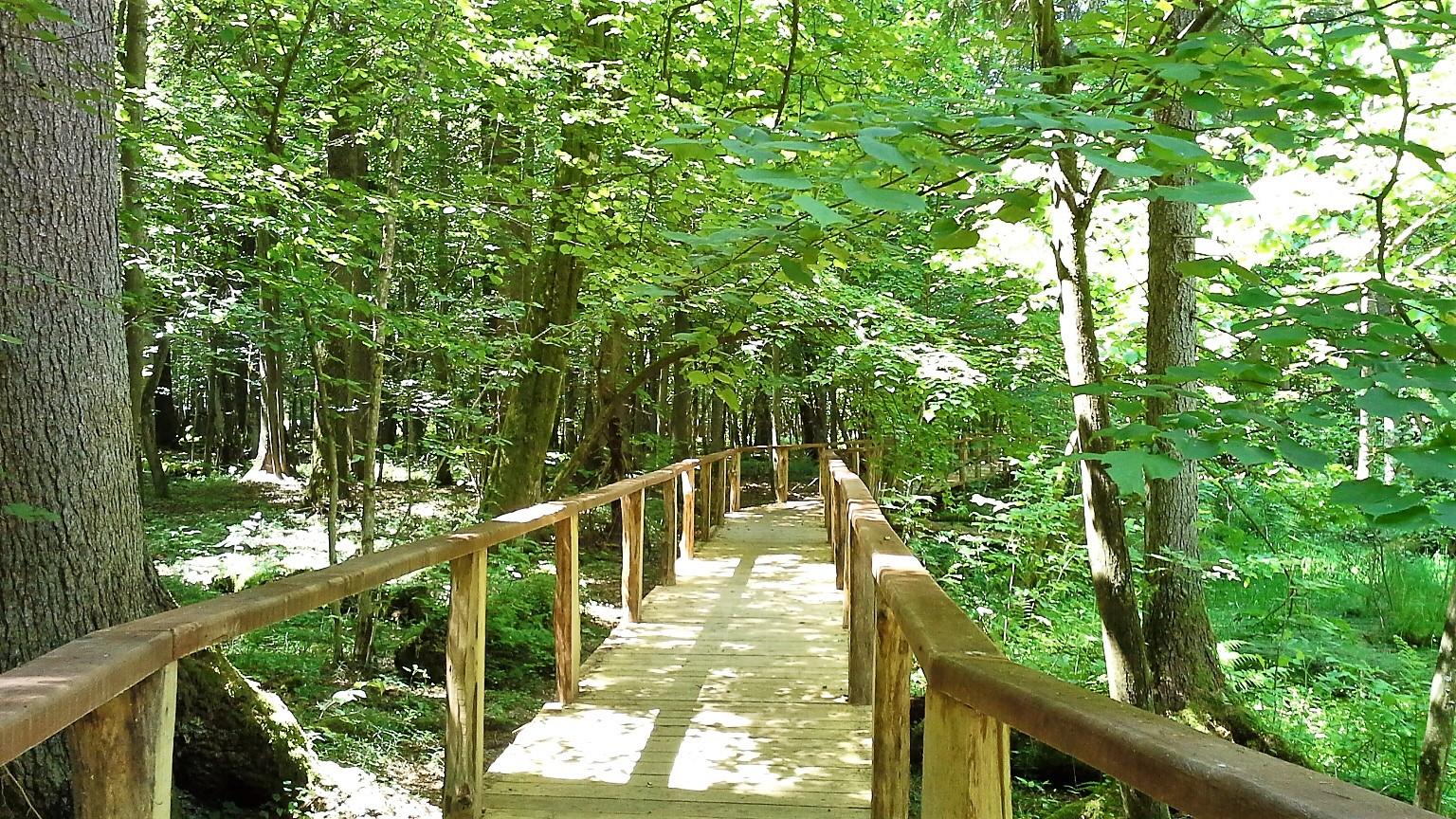 L'area protetta della Foresta di Bialowieza