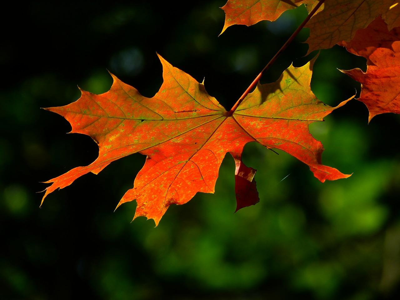 Dove vedere il foliage