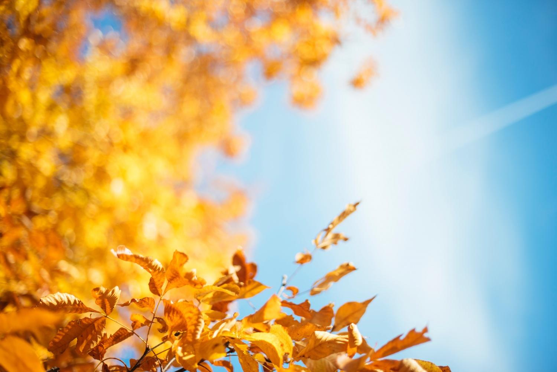 Foliage viaggio lowcost
