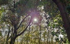 Delta del Po Visitare il Bosco della Mesola