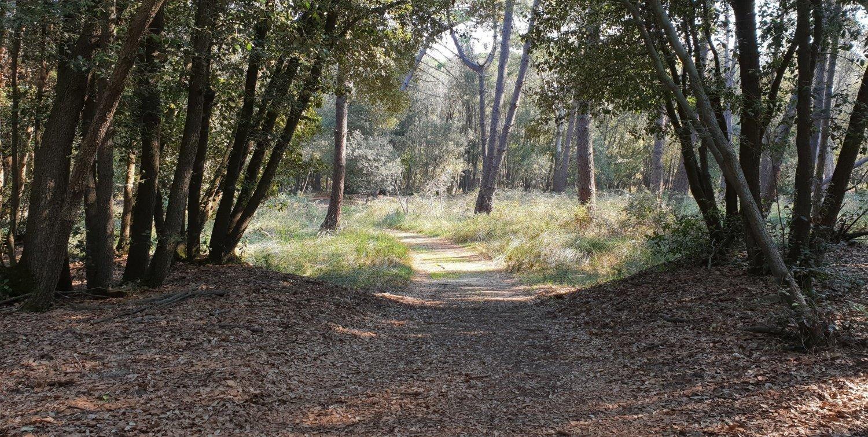 Sentiero bosco della mesola