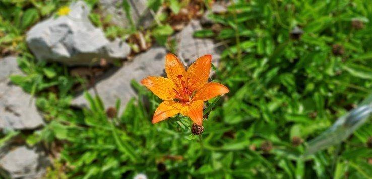 Visitare Giardino Esperia Monte Cimone