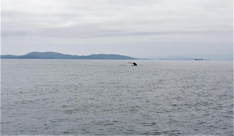Balena sfondo San Juan