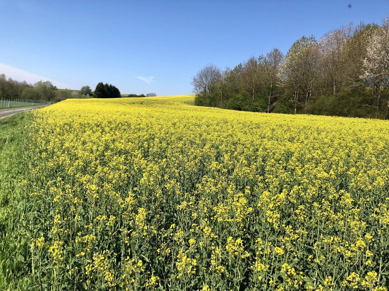 La natura in Vallonia