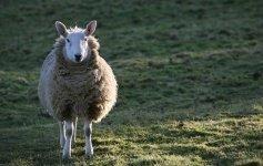 Viaggio nelle leggende gallesi
