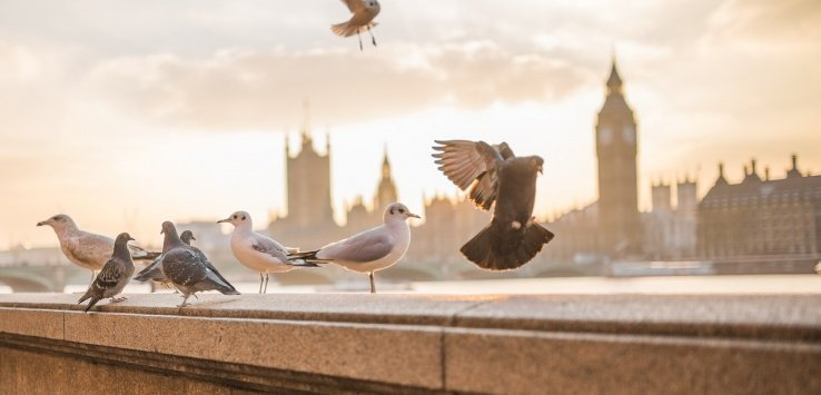 Londra e William Blake