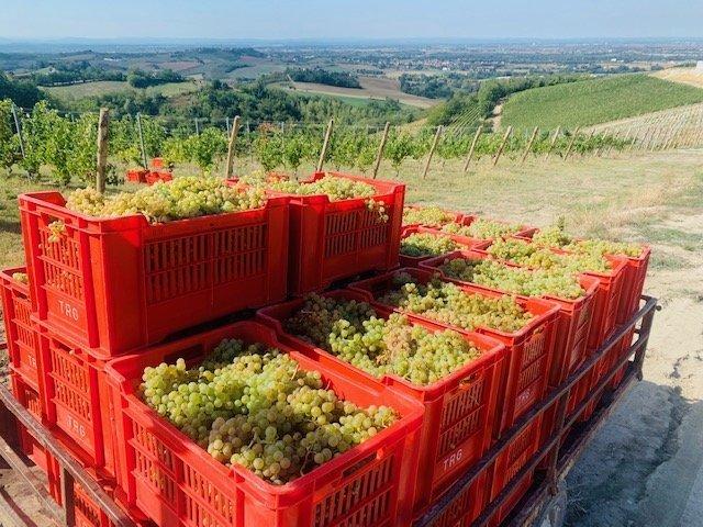 Vino Italiano nel mondo