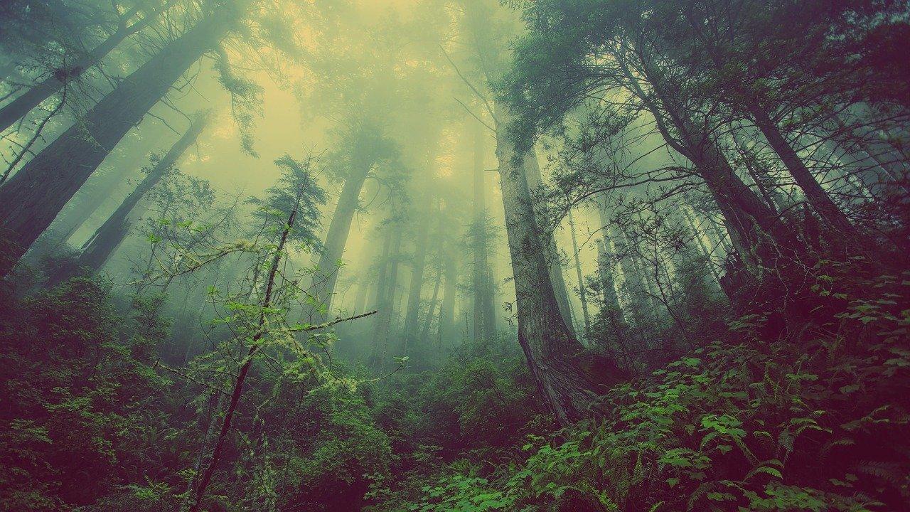 La forza degli alberi
