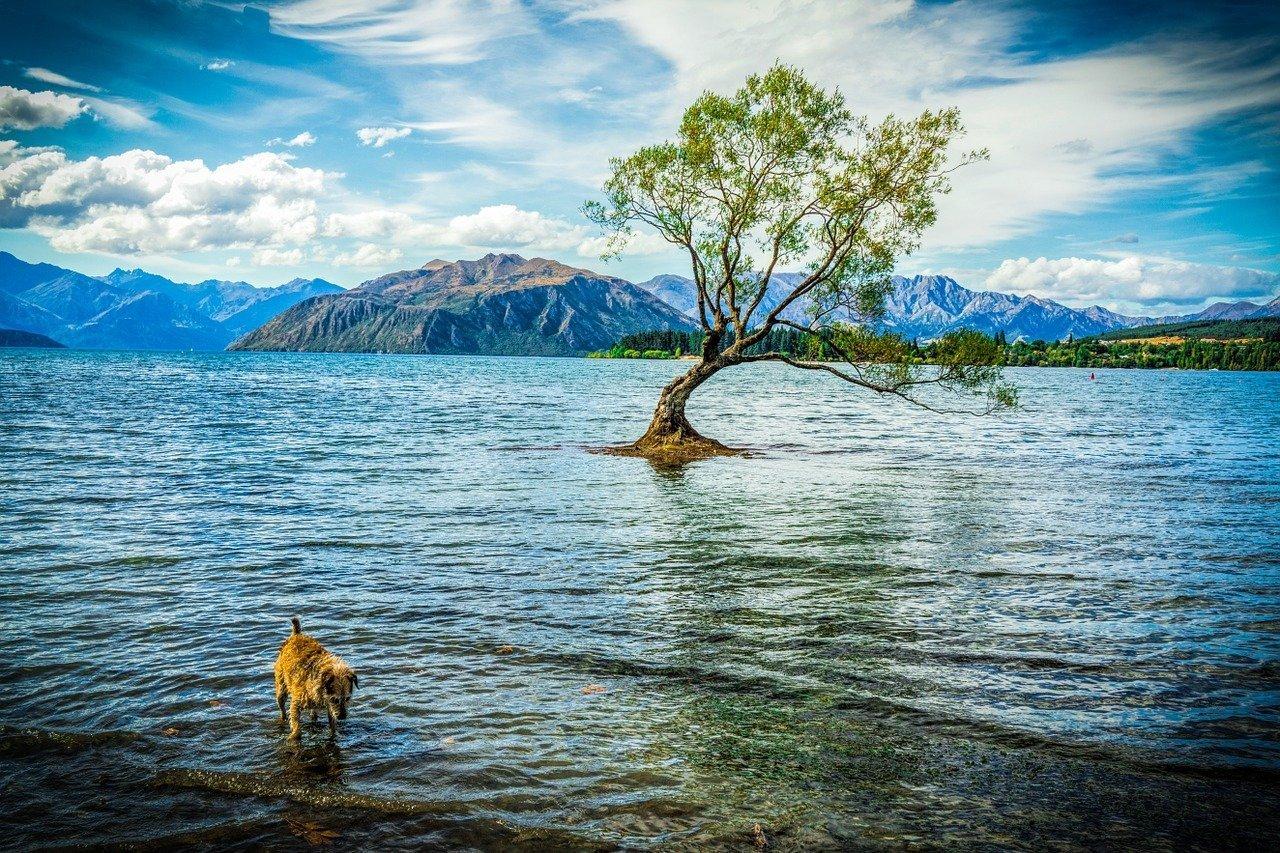 Lago Wanaka New Zealand
