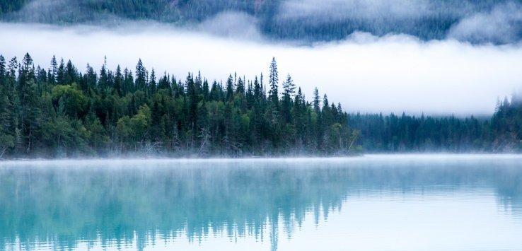 Gli alberi da fotografare nel mondo