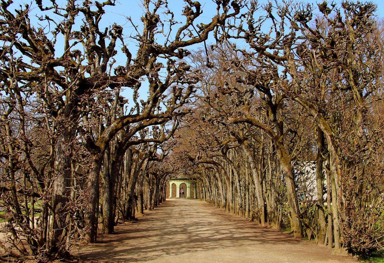 Dove si trova Bayreuth e come raggiungerla