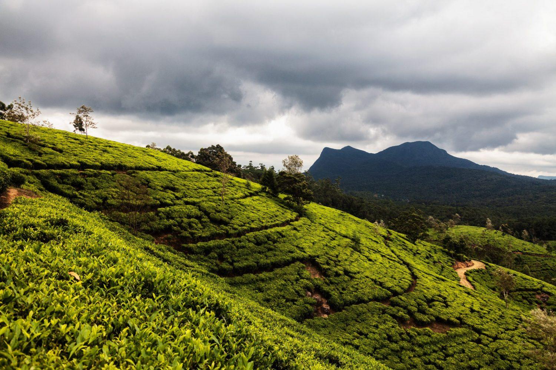 Richiedere il visto per lo Sri Lanka