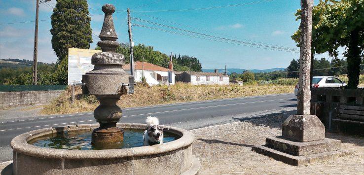 Fare il Cammino di Santiago con un cane La storia di Matteo