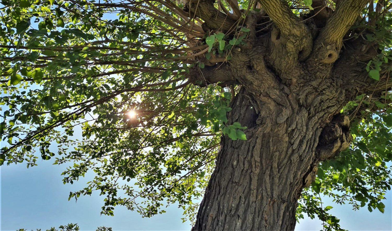 albero edigio Fortezza Alta