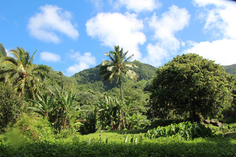 Andare a vivere alle isole Cook