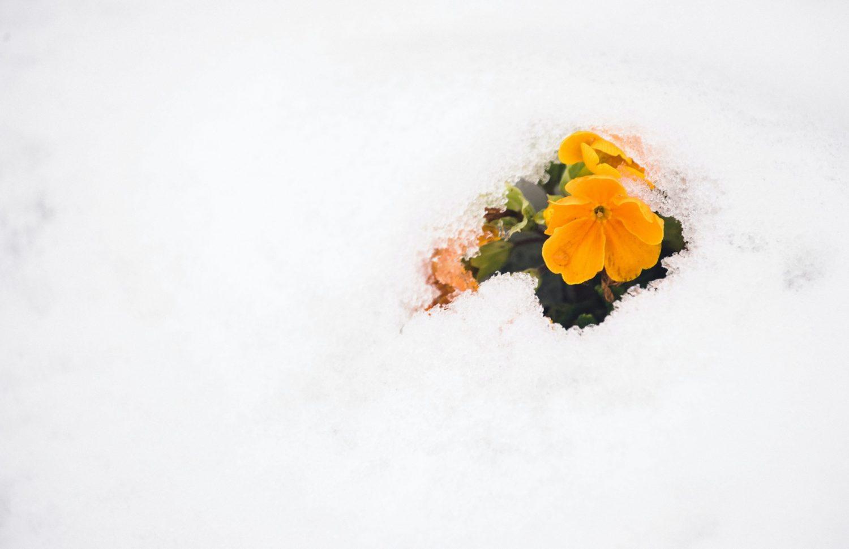 Sai Inverno