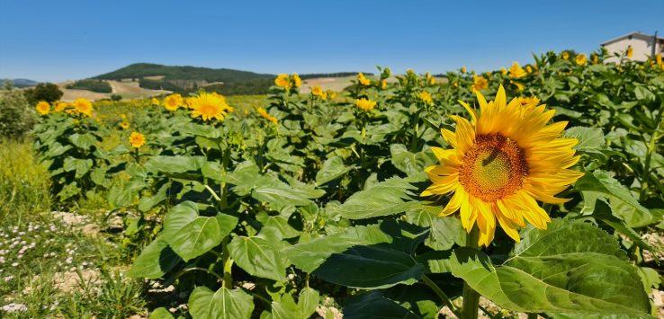 Il giallo dell'Umbria