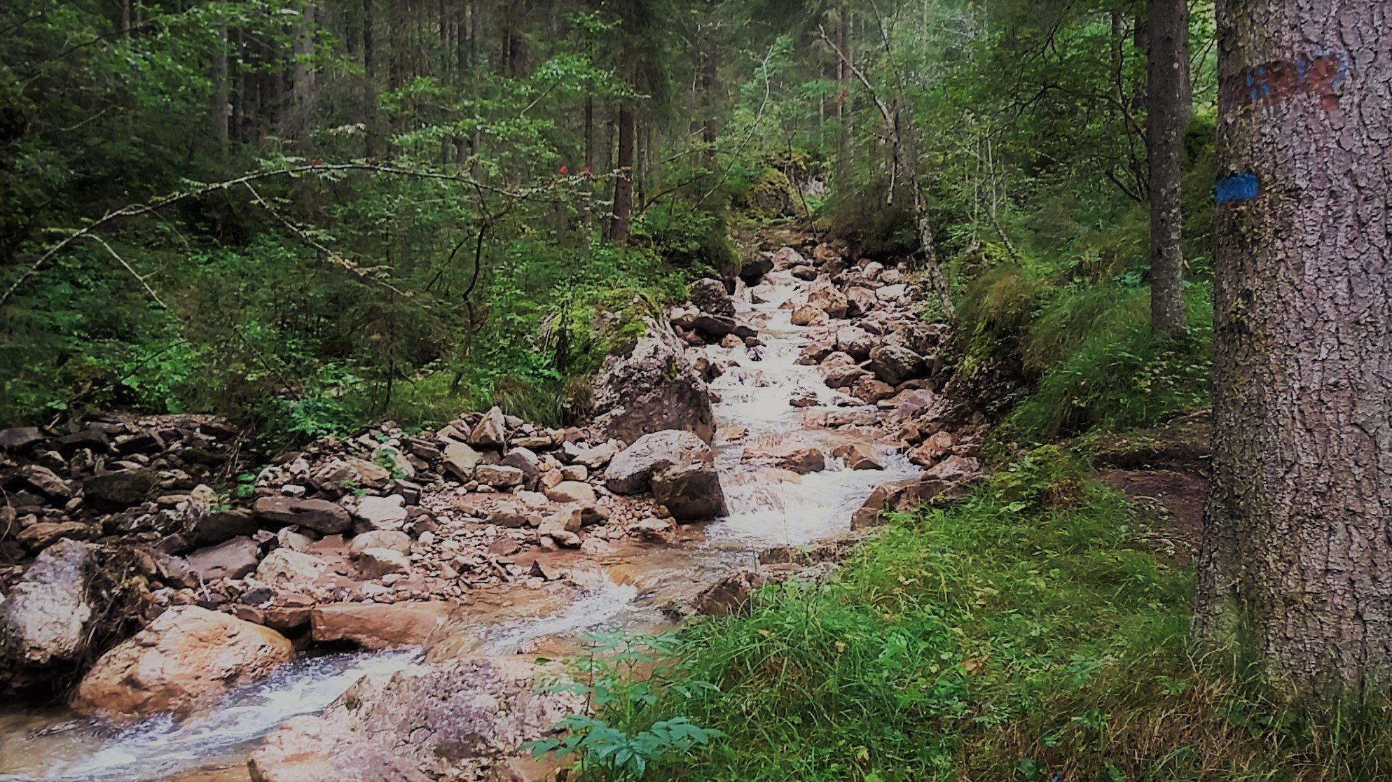 Bosco di Ischiez Val di Fassa