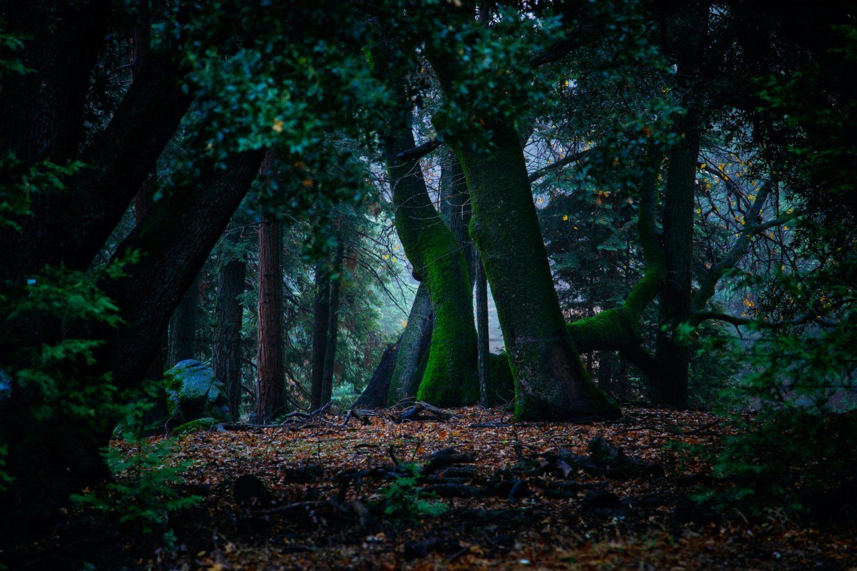 Mi ritrovai in una selva oscura