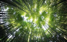 I boschi da vedere almeno una volta nella vita